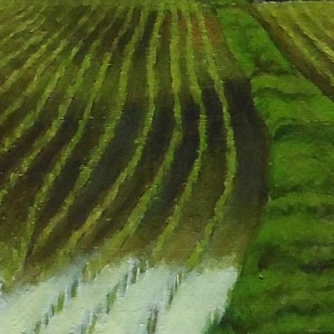 米どころ岡山の六月の風景